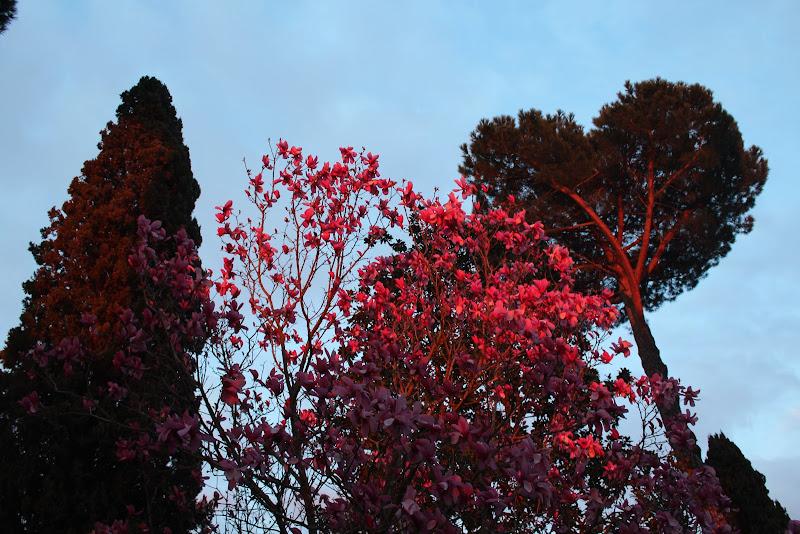 In fiore. di Marycrick86