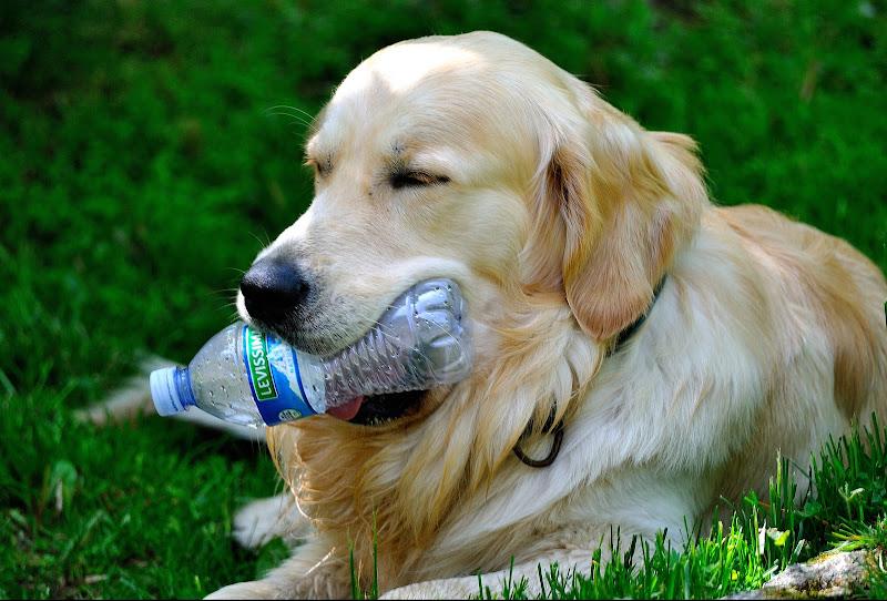 L'hanno capito anche i Cani che bisogna differenziare !!! di Claudio Tenca