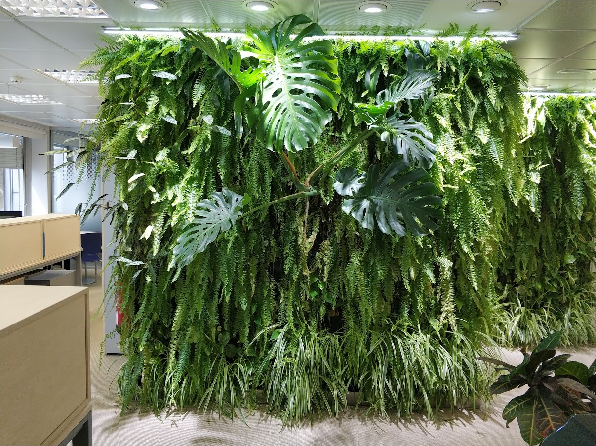 Así es como esta uno de los jardines verticales de la oficna