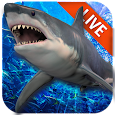 Live Wallpaper with Shark in the Ocean icon