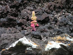 Photo: Цветы и лава/Flowers and lava