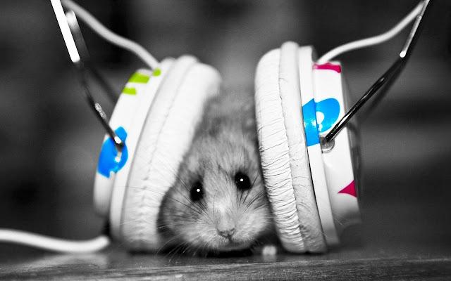 Cute Hamsters Tab