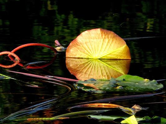stagno  multicolore con ninfee di mariellaturlon