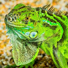Baby Boy by Ken Nicol - Animals Reptiles (  )