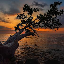 Tree, sea and sunset. by Valeriy Ryasnyanskiy - Landscapes Sunsets & Sunrises ( blue sky, seascape, sunset, thailand, asia, tree, travel, blue hour, colorful, sea,  )