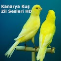 Kanarya Kuş Zil Sesleri HD icon