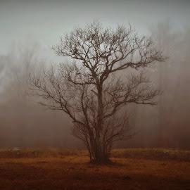by Zoran Konestabo - Landscapes Forests (  )