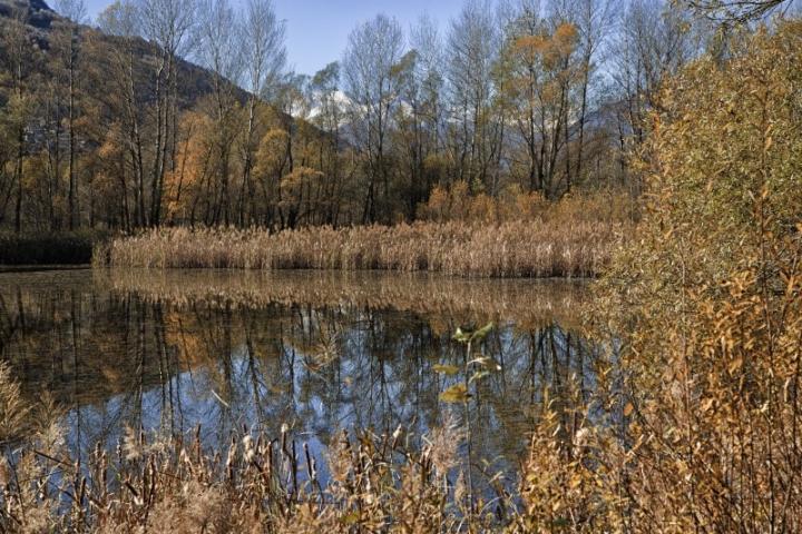 Oro sul lago di anyram