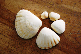 Photo: Winning Shell Numbers: 736, 530  16. Sea shells from Senegal Shell island