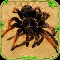 Spider Simulator: Life of Spider icon