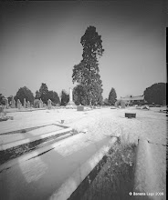 Photo: Wootton Bassett Welingtonia in the snow, 55mm f/160 4x5 pinhole camera, Ilford VC paper, yellow filter