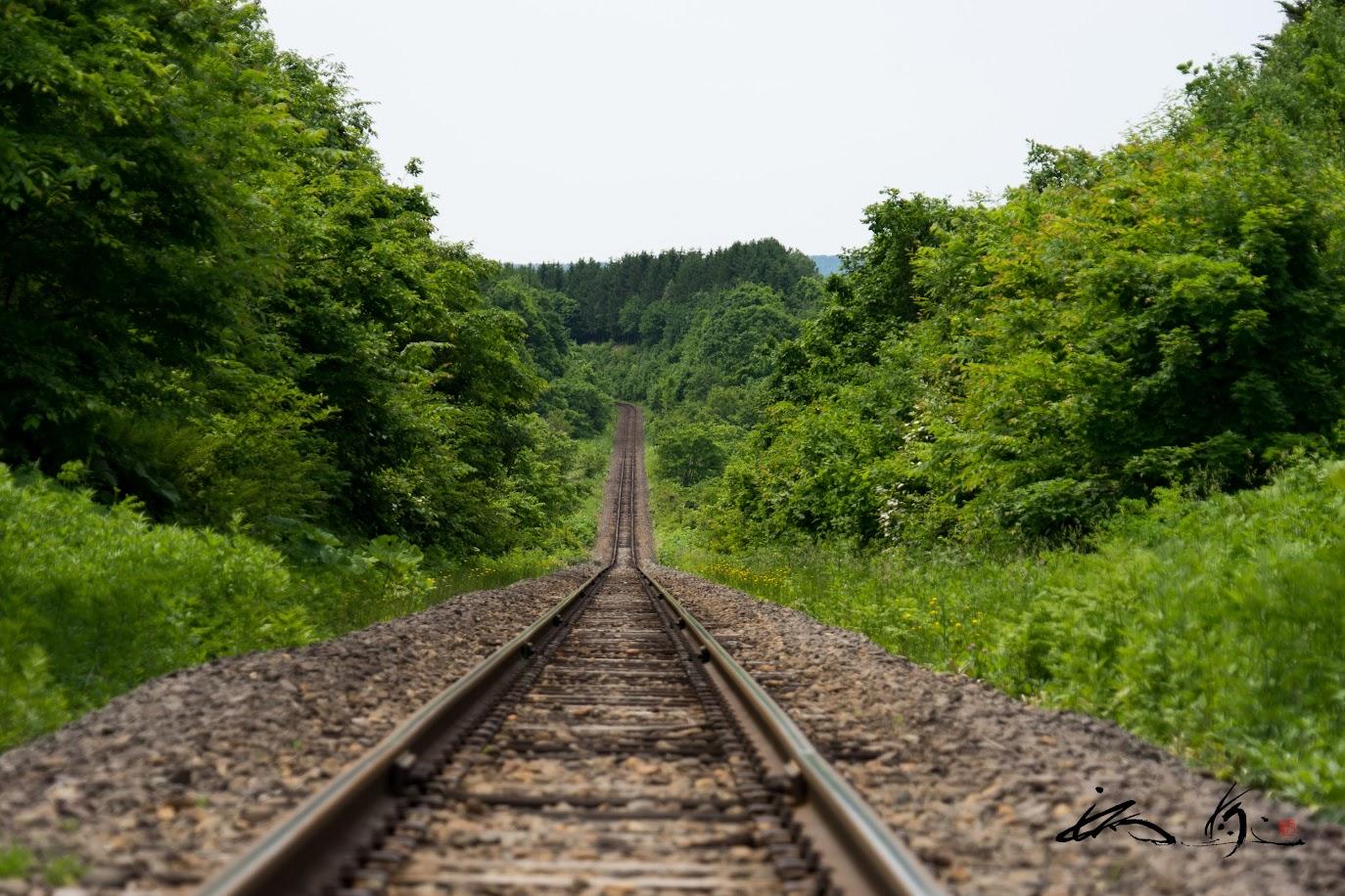 緑繋がる線路