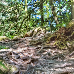 HDR silly roots done.jpg