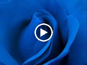 Video: A. Vivaldi  La caccia, Op. 8 n. 10 - Concerto for violin, strings   b.c. in B flat major (RV 362) -