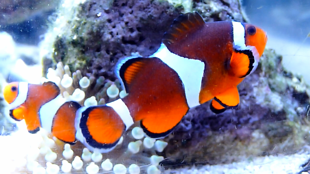 Nemo C 1.jpg