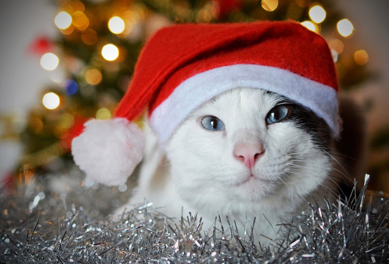 Aspettando...Natale! di Licia Piazza
