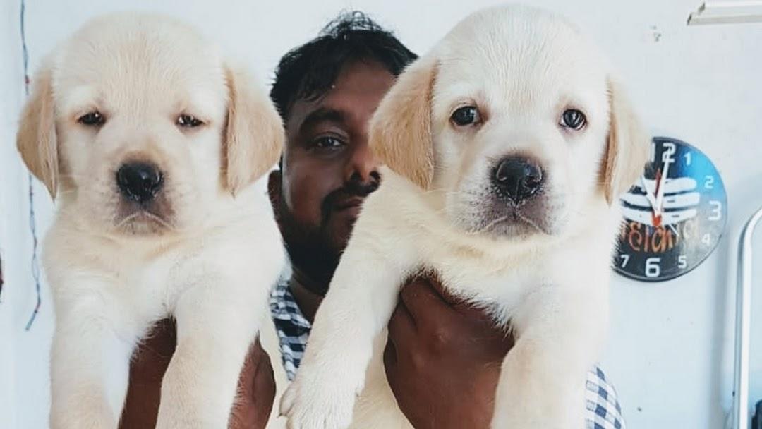 Odisha Dog and Puppy House - Pet Shop in Chandrasekharpur