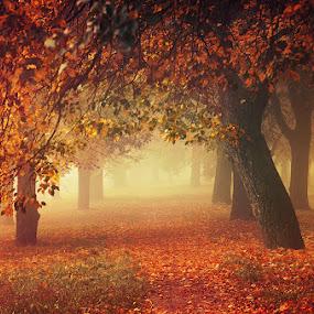 Autumn Dreams I. by Zsolt Zsigmond - Landscapes Forests ( nature, tree, season, autumn, leaf, yellow )