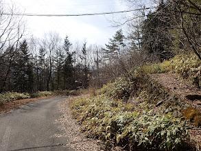 ここから長い林道歩きに(舗装路)
