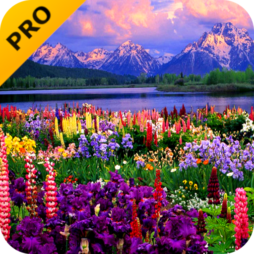 Valley Of Flowers PRO Live Wallpaper Android APK Download Free By Bird Fly