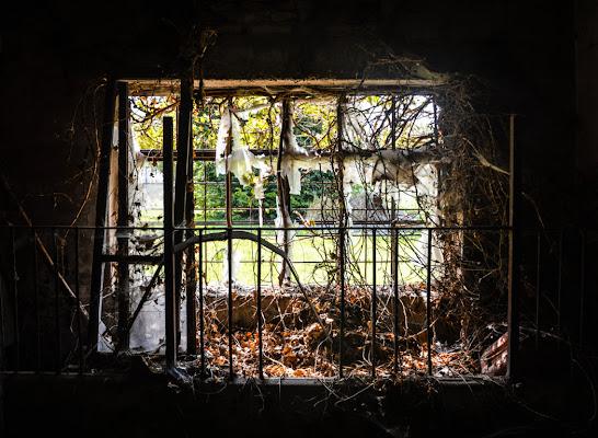 Solitary window di Nicolamanto