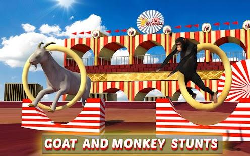 Goat-Monkey-Stunts 11