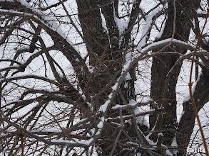 Photo: havas fa