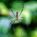 Spider, Golden silk orb-weaver