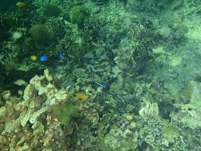Photo: Panglao Island Reef, Philippines