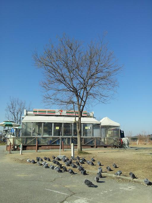 Gangster Pigeons