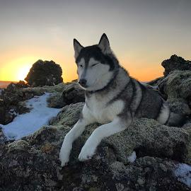 Ronja by Bjarklind Þór - Animals - Dogs Running