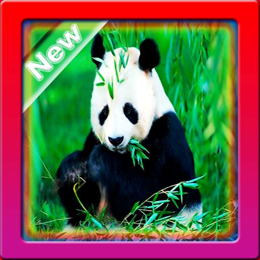 Wallpaper Panda HD screenshot 1