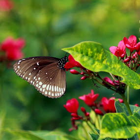 Nectar Time by Balaji Mohanam - Backgrounds Nature