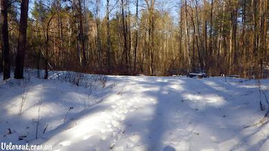 Photo: Место отдыха в лесу