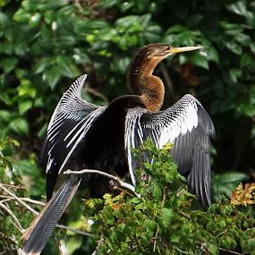 Strike A Pose by Alycia Marshall-Steen - Animals Birds (  )