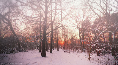 Photo: As Nature Blends Her Palette  Good morning Googlers :)  I was sat in a forest watching the sun slowly set between the trees when the mist started to descend, it was as if one state was stopping and another was starting and mother nature went about playing with the colours she had to hand. The warmth cast of the sun on the snow slowly began face and the colder hues took over, the dark shadows that should have been cast by the setting sun obscured by the falling mist, dappled light in competition with the oncoming night.  I sometimes sit and watch and kind of forget as to why I am there in the first place and set about taking images, once done I carry on watching while I have enough light to see, nature never stops filling me with wonder.   I still do not feel too good, its as if I am drunk without the please of drinking but I'm off to get seen to later and hopefully a few pills later I will be back in full swing :)