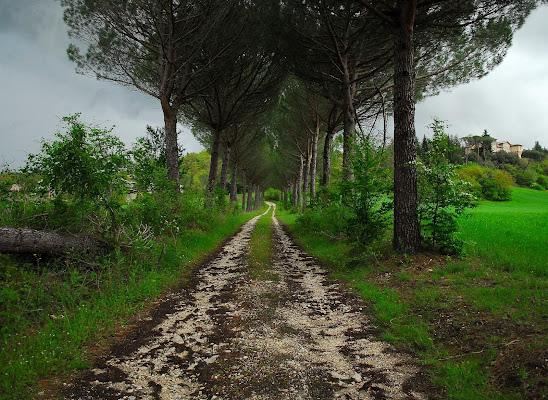 sentiero di campagna di Mikmata