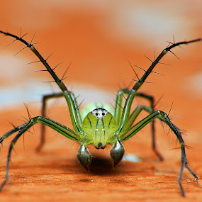 JS by Hanif Mohamad - Animals Insects & Spiders