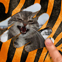 Scratch and guess the animal icon