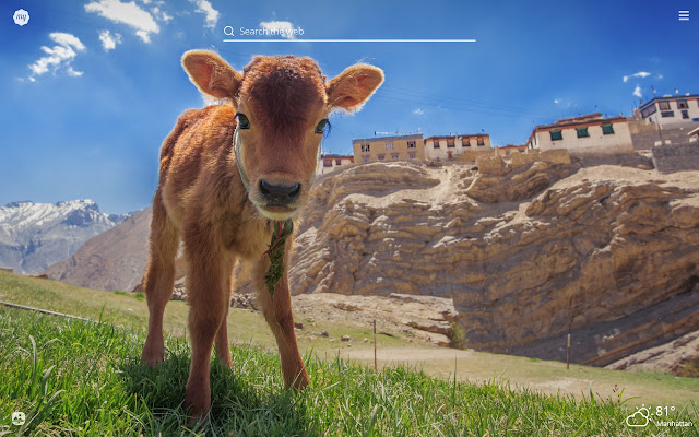 My Baby Cows Hd Wallpapers New Tab Theme