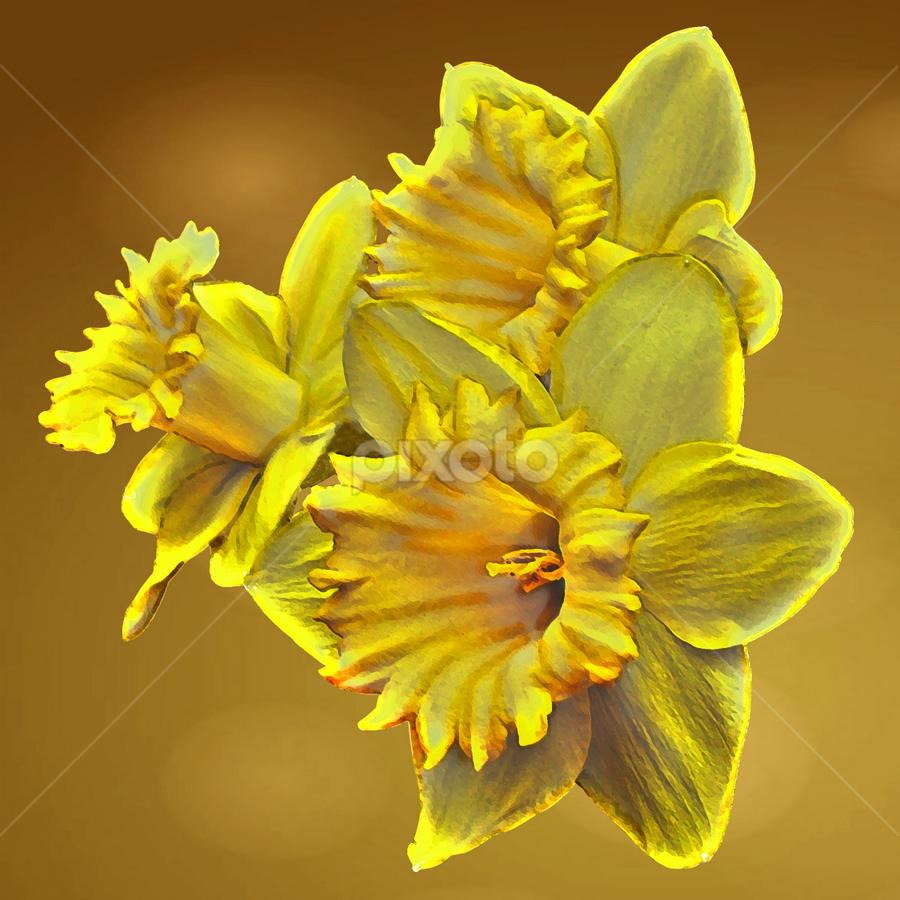 Three Daffodils by Joseph Vittek - Nature Up Close Gardens & Produce ( plant, orange, daffodil, yellow, gold, flower,  )