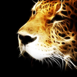 cool animal wallpapers android apps on google play