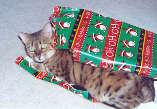 Photo: Tzarina loved helping wrap and unwrap Christmas gifts.
