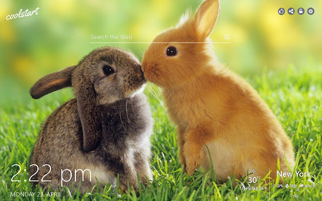 Cute Rabbits and Bunnies HD Wallpapers Theme
