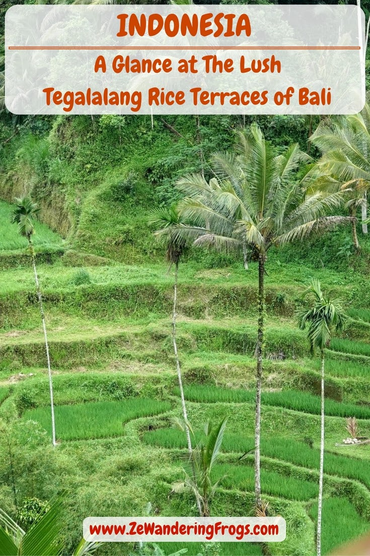 A Glance at The Lush Tegalalang Rice Terraces of Bali // One cannot go to Bali and not make time to see the Tegalalang Rice Terraces.