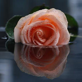 mawar.jpg