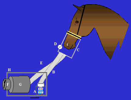 Radioactive aerosol administration. The radioactive aerosol produced by a generating system (A) reaches the horse through a flexible tube (B) connected to an airtight facemask (C). A one way valve (D) on the mask assures air complementation during inspiration. Exhaled air is collected by another tube (E) to be vented owing an extractor fan (F) to a filter (G) were undeposited radioactive aerosol particles are trapped. The delivery and collection systems are enclosed in a lead-shielded box (H).