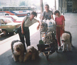 Photo: INT Show Budapest, HU 1985 again. Me with my first bearded collie Snurka vom Hoesch We moved by train!