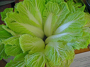 Photo: napa  cabbage