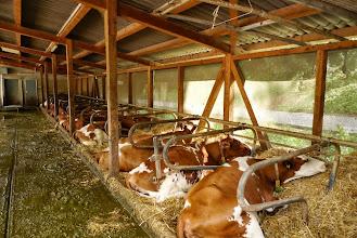 Photo: Im weichen Stroh fühlen sich alle Tiere sehr wohl. Saubere Tierhaltung!